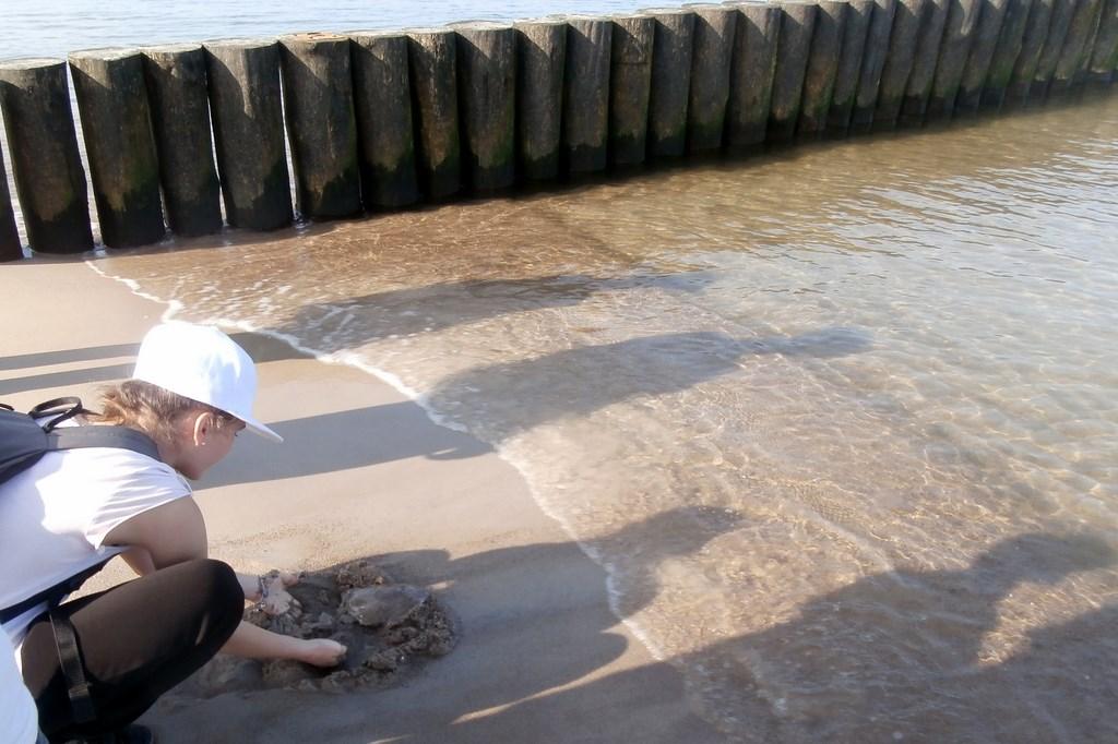 Justynka ratuje meduz?, któr? morze wyrzuci?o na brzeg.